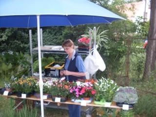 Virágok pesthidegkúti kertészetből